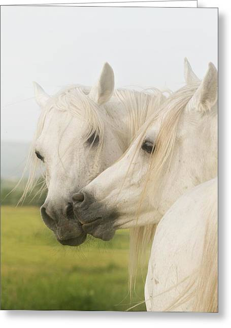 Horses Art Print Greeting Cards - Horse Kiss Greeting Card by El Luwanaya Arabians