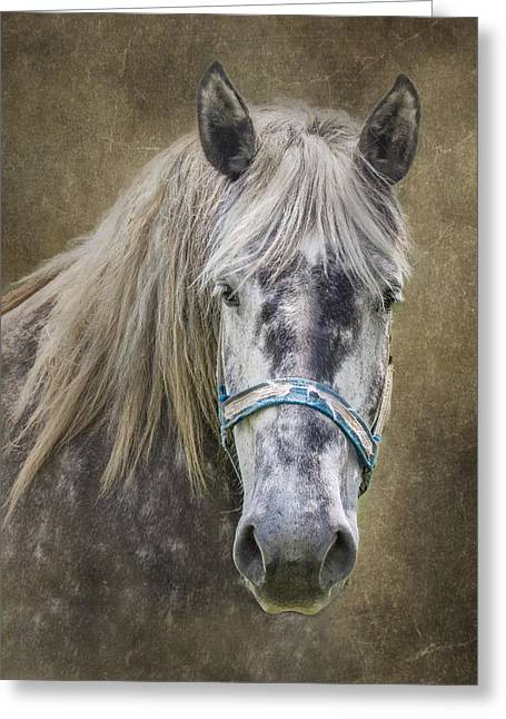 Spotted Horse Greeting Cards - Horse Portrait I Greeting Card by Tom Mc Nemar