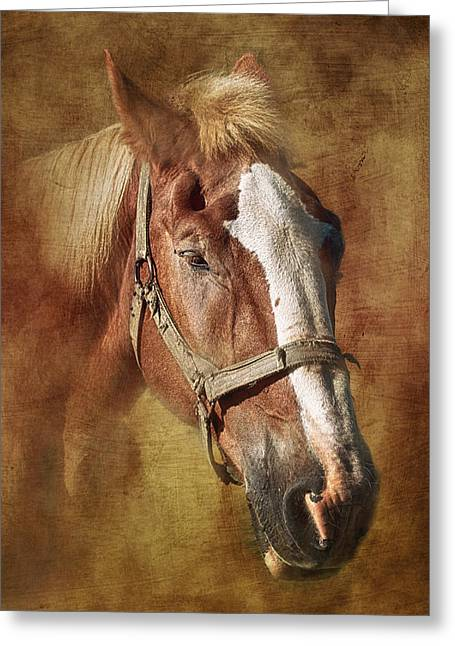 Horseback Photographs Greeting Cards - Horse Portrait II Greeting Card by Tom Mc Nemar