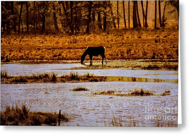 Silhouettes Of Horses Greeting Cards - Horse Silhouetted Greeting Card by Tom Gari Gallery-Three-Photography