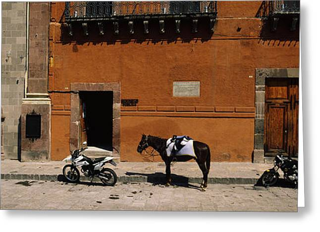 San Miguel De Allende Greeting Cards - Horse Standing Between Two Motorcycles Greeting Card by Panoramic Images