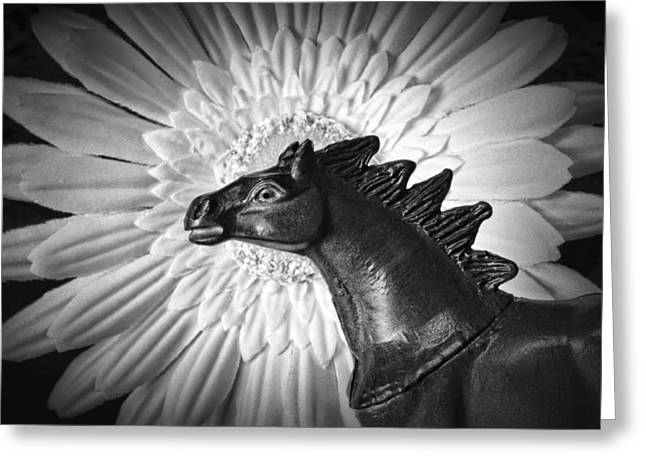 Horse Startled By A Daisy Greeting Card by Jeff  Gettis