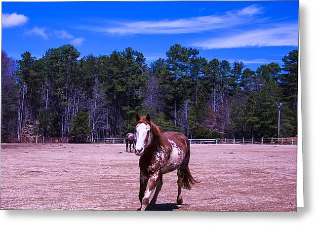 Quarter Horse Digital Art Greeting Cards - Horse trotting in Greeting Card by Chris Flees