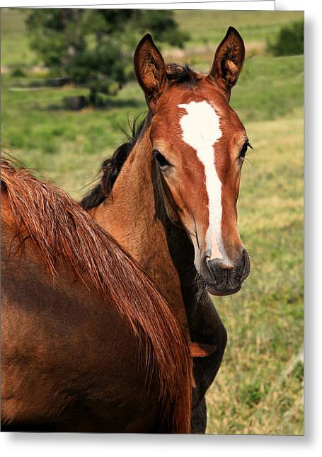 Race Horse Greeting Cards - Horse Yearling Greeting Card by Bert Hoferichter