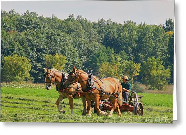 Amish Farms Mixed Media Greeting Cards - Horsen Around Greeting Card by Robert Pearson