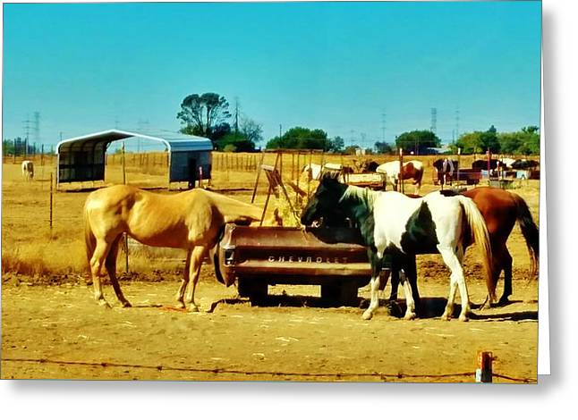 The Horse Greeting Cards - Horses at the Chevrolet Feeder Greeting Card by Peggy Leyva Conley