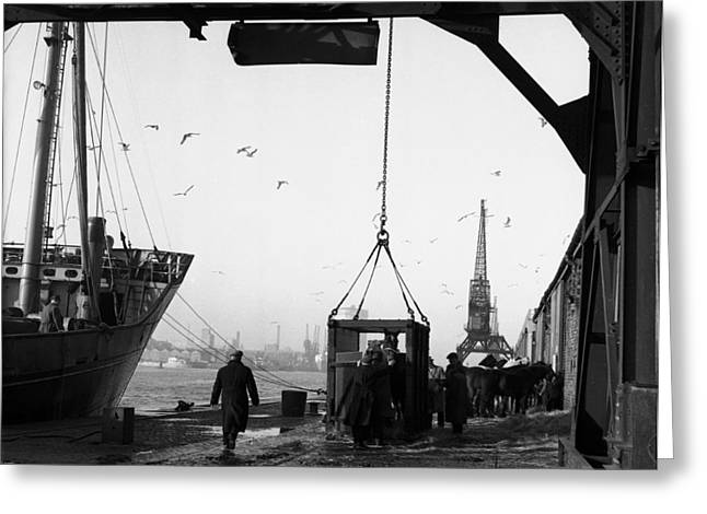 The Horse Greeting Cards - Horses being loaded for export Greeting Card by Irishphotoarchive