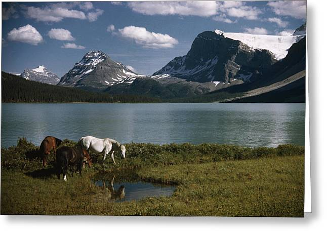 Best Sellers -  - Grazing Snow Greeting Cards - Horses Graze In A Lakeside Meadow Greeting Card by Walter Meayers Edwards