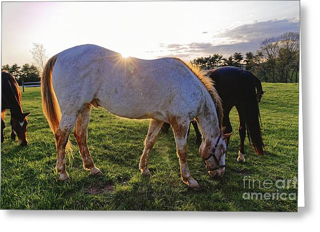 Equus Ferus Greeting Cards - Horses Grazing in a Field  Greeting Card by George Oze