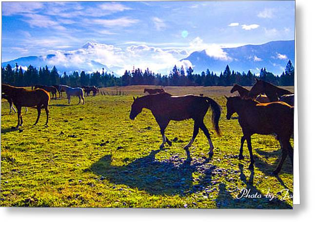 Greeting Cards - Horses Grazing in the Mountains of Glacier National Park Montana Panoramic Greeting Card by John Tarr Photography  Visual Adventurer
