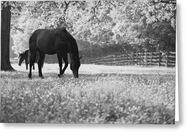 Horses In A Field Of Flowers Greeting Card by Rachel Morrison