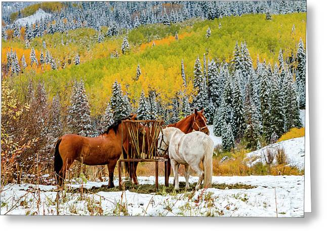 Horses In Autumn Mountain Scene With Snow Greeting Card by Teri Virbickis