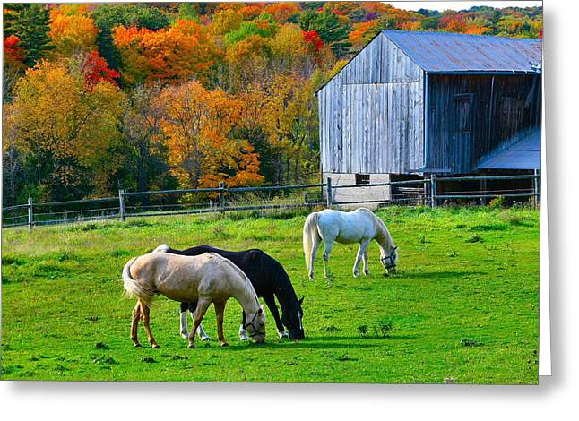 Horse In Field Greeting Cards - Horses in Fall Greeting Card by David  Hubbs