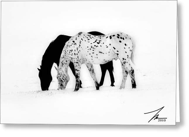 Snow Storm Greeting Cards - Horses In Snow Greeting Card by Steve Munch