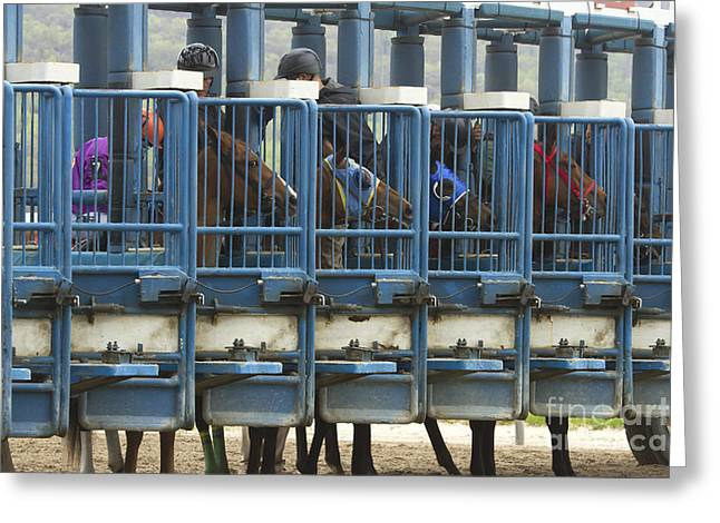 Race Horse Greeting Cards - Horses in starting gate Greeting Card by Karen Foley