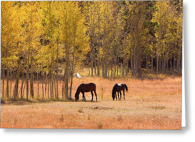 The Lightning Man Greeting Cards - Horses in The Autumn Aspens Greeting Card by James BO  Insogna