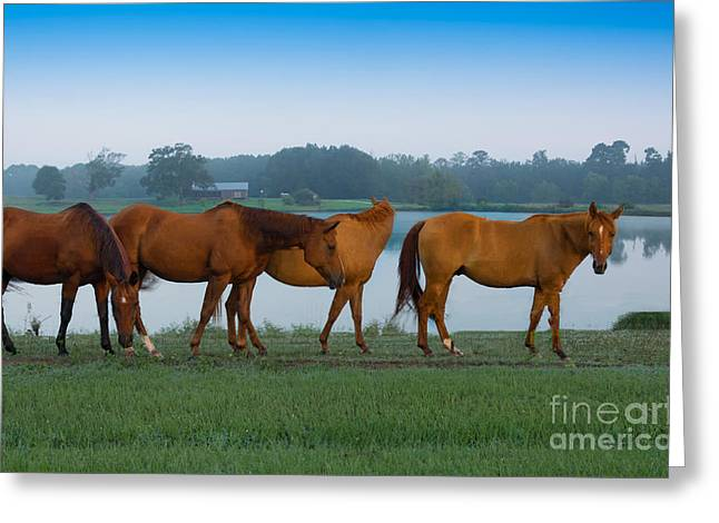 Pond Tapestries - Textiles Greeting Cards - Horses on the Walk Greeting Card by James Hennis