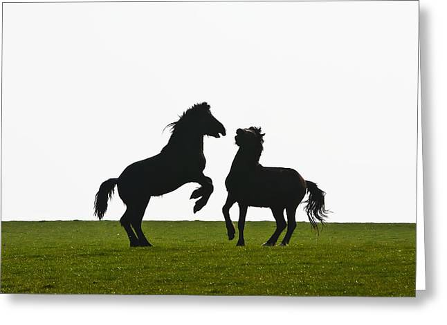 Field. Cloud Greeting Cards - Horses Playing In A Field Near Abermawr Greeting Card by Paul Quayle