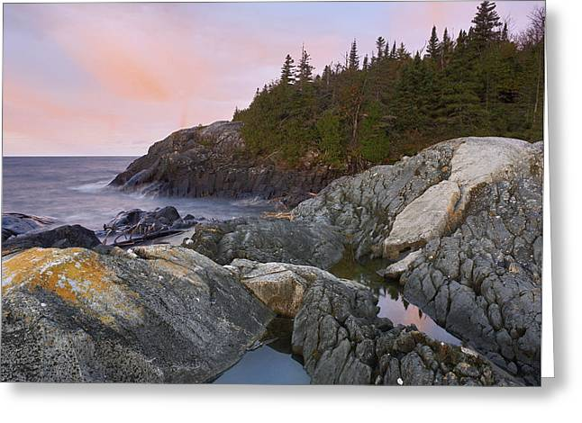 Forest Habitat Greeting Cards - Horseshoe Bay On Lake Superior Pukaskwa Greeting Card by Tim Fitzharris