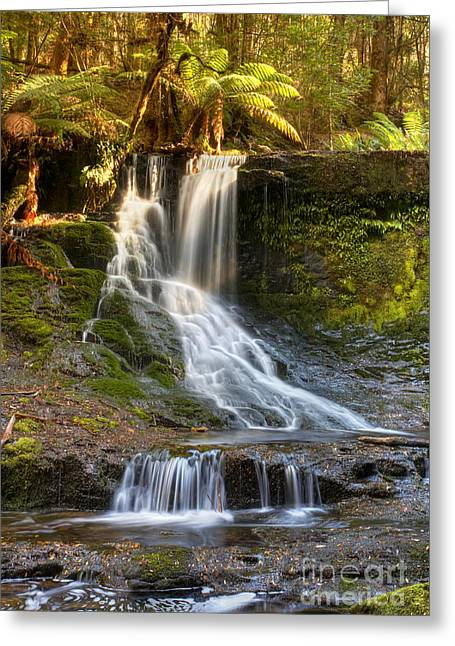 Horseshoe Falls Greeting Cards - Horseshoe Falls Tasmania Greeting Card by Bill  Robinson