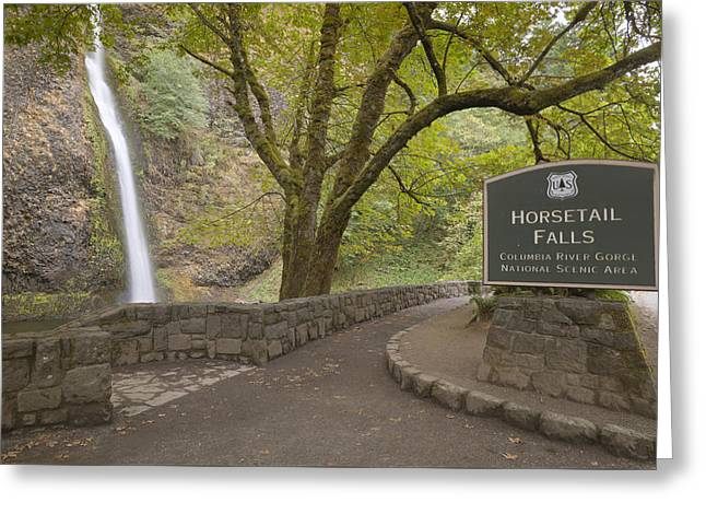 Horsetail Falls Columbia River Gorge Oregon. Greeting Card by Gino Rigucci