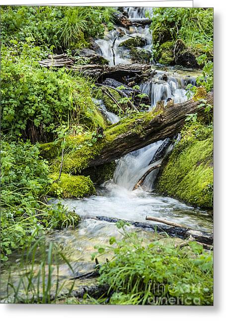 Oak Creek Greeting Cards - Horton Springs Greeting Card by Anthony Citro