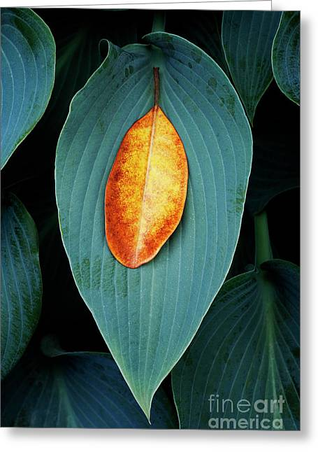 Hosta And Rhododendron Leaves Greeting Card by Tim Gainey