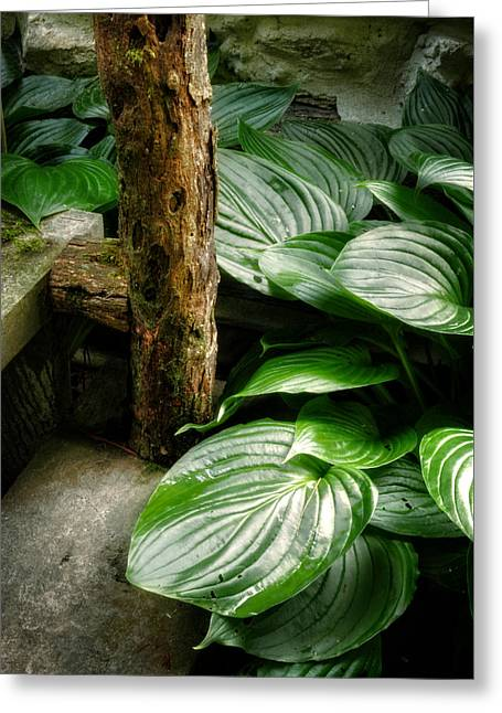 Hostas Greeting Cards - Hosta And Steps Greeting Card by Greg and Chrystal Mimbs
