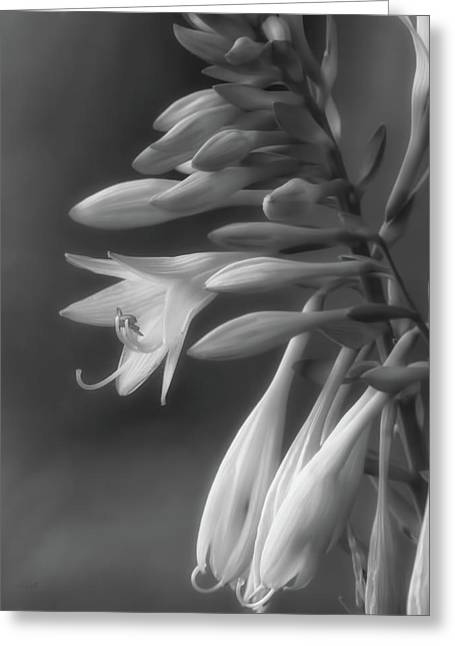 Hosta Greeting Card by Bob Orsillo