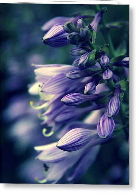 Backlit Digital Art Greeting Cards - Hosta Petals Greeting Card by Jessica Jenney
