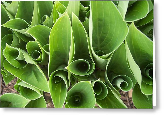 Hostas 4 Greeting Card by Anna Villarreal Garbis