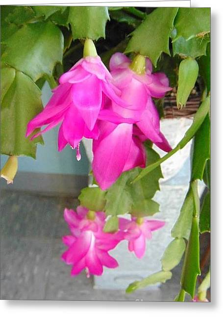 Grocery Store Greeting Cards - Hot Pink Cactus Flower Greeting Card by Charlotte Gray