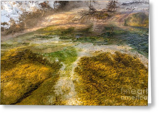 Hot Springs Pool Greeting Card by Sue Smith