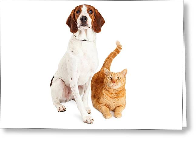 Hound Dog And Orange Cat Together Greeting Card by Susan Schmitz