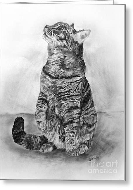 House Pet Drawings Greeting Cards - House Cat Greeting Card by Scott Parker