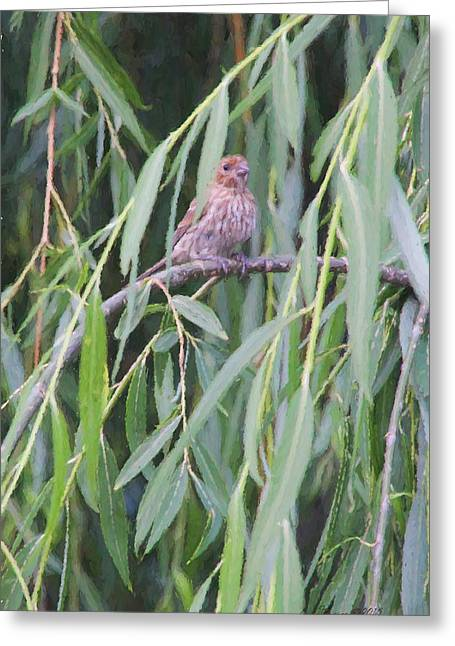 Weeping Greeting Cards - House Finch 55 Greeting Card by EricaMaxine  Price