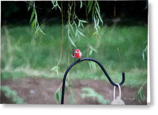 Weeping Greeting Cards - House Finch 6-2-15 Greeting Card by EricaMaxine  Price