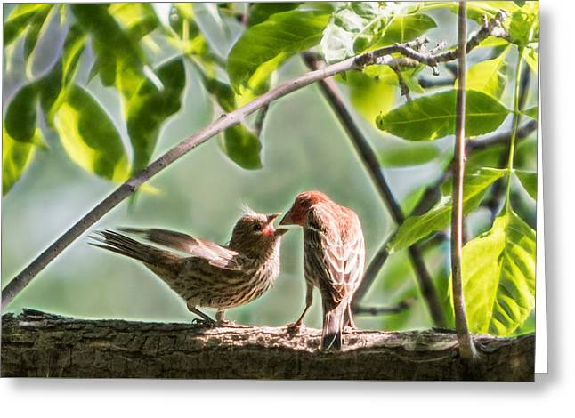 Office Space Greeting Cards - House Finch Love Greeting Card by Patti Deters