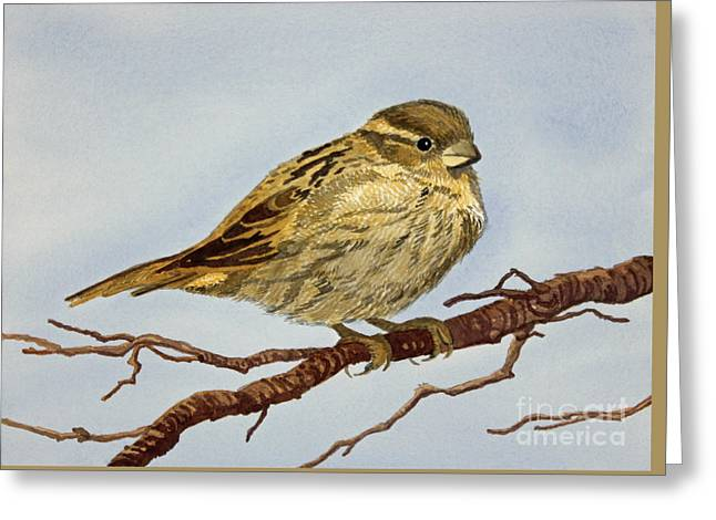 Appleton Art Greeting Cards - House Sparrow Greeting Card by Norma Appleton