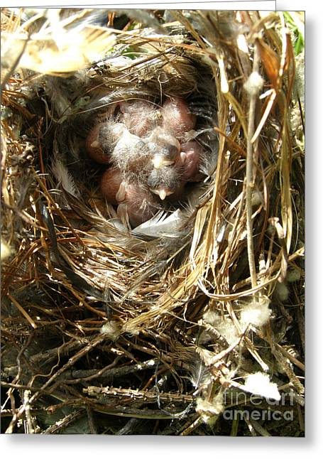 House Wren Family Greeting Card by Angie Rea