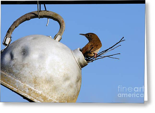 Abandonment Greeting Cards - House Wren in New Home Greeting Card by Thomas R Fletcher