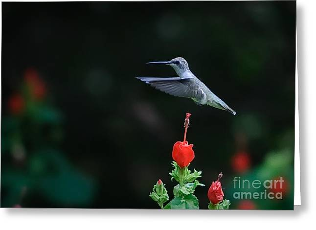 Hover Greeting Card by Charles Dobbs