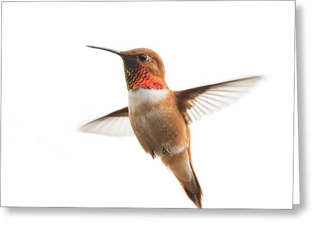 Hovering Greeting Cards - Hovering Rufous Hummingbird Greeting Card by Angie Vogel