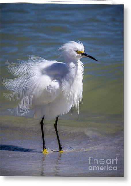 White Bird Greeting Cards - How Do I Look Greeting Card by Marvin Spates