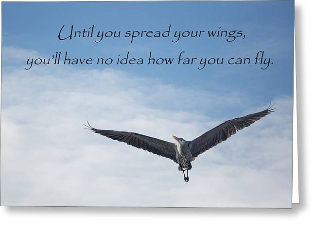 Bird In Flight Greeting Cards - How Far Can You Fly Greeting Card by Bill Wakeley