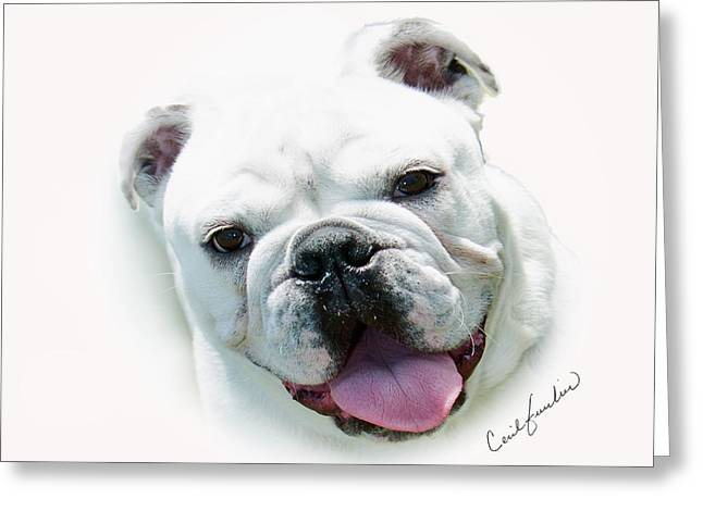 Mascots Greeting Cards - How Much is that.... Greeting Card by Cecil Fuselier