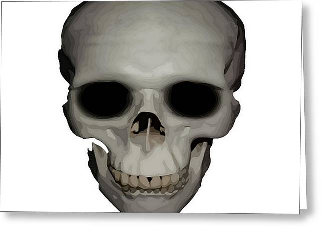 Biological Digital Greeting Cards - Human Skull Vector Isolated Greeting Card by Tracey Harrington-Simpson