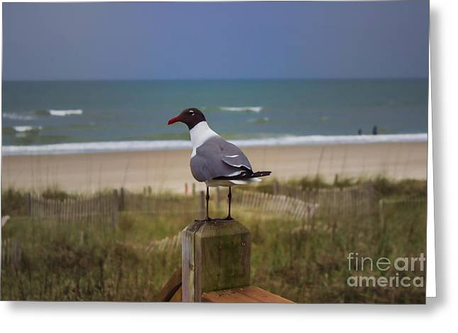 Sand Art Greeting Cards - Humans are Weird Greeting Card by Roberta Byram