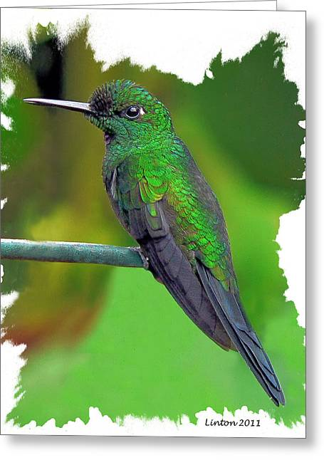Costa Digital Greeting Cards - Hummer 2 Greeting Card by Larry Linton
