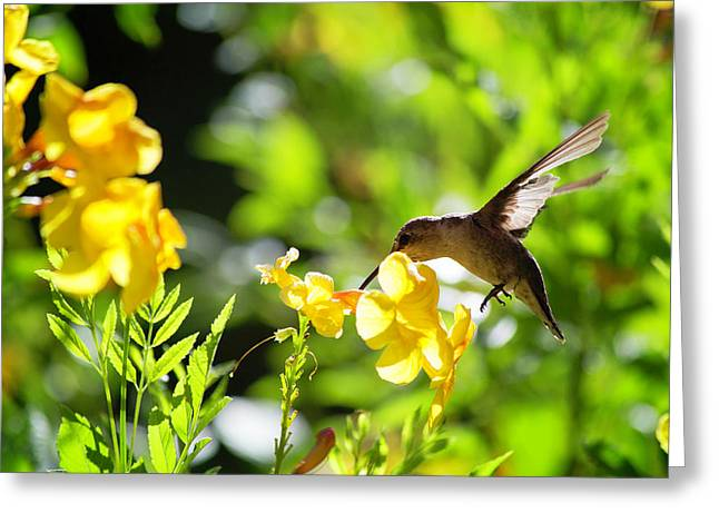 Hummer Greeting Card by Nancy Forehand